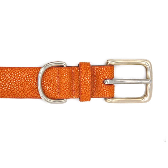 FURST - Buckle of a high-end dog collar in high quality shagreen canary color