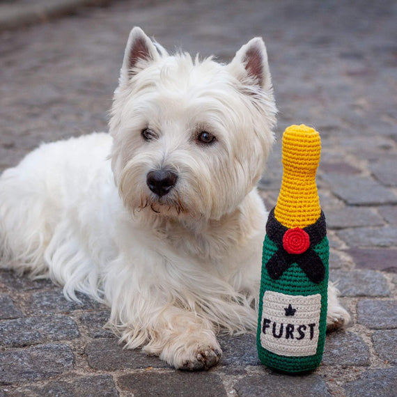 FURST - Westie with his Champagne toy