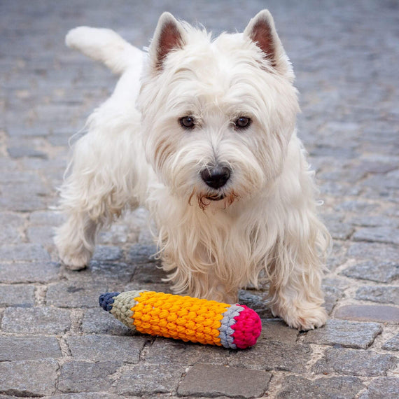FURST - Westie with his toy Dog pencil