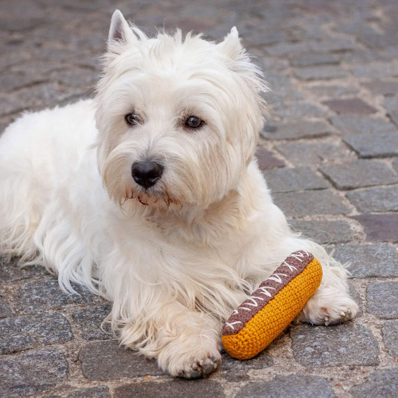 FURST - Westie with his toy Choco Lightning for dogs
