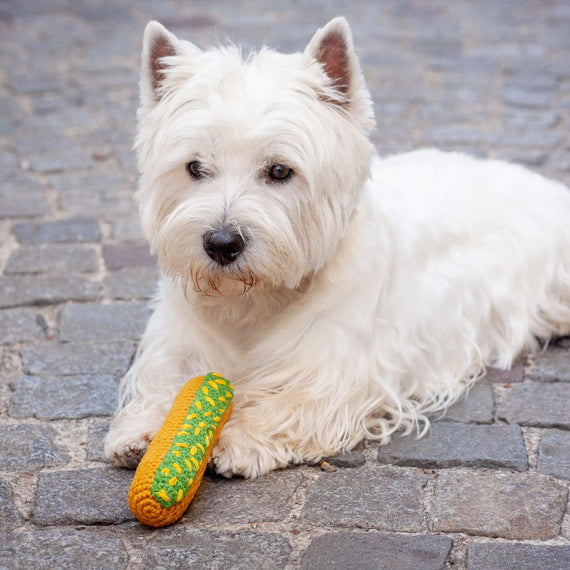 FURST - Westie with his toy Éclair Pistache for dog