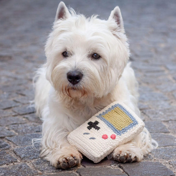 FURST - Westie con su Toy Game Toy for Dog