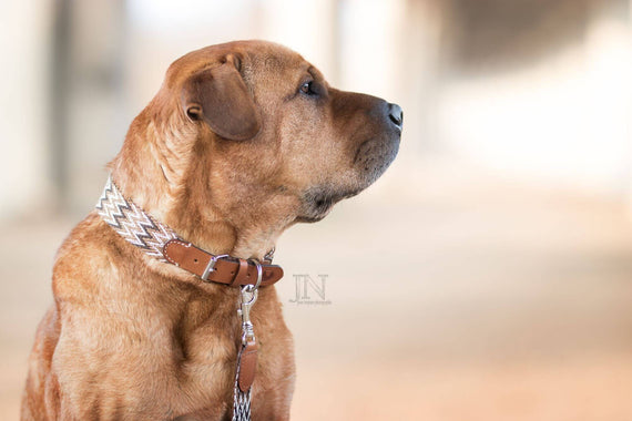 FURST - Adorable dog with a high-end Peruvian fabric necklace made of braided organic cotton and vegetable tans of brown color