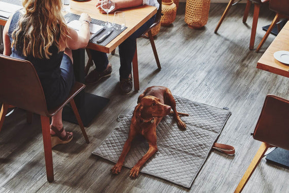 FURST - Peaceful dog at the restaurant with his masters on his taupe colored exit carpet