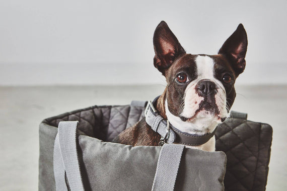 FURST - Adorable French Bulldog in his travel bag Slate color Via