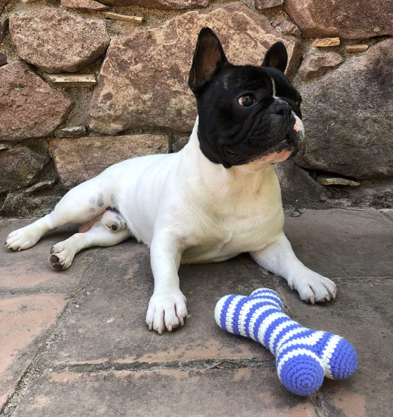 FURST - French Bulldog with Azure Bones Atlas