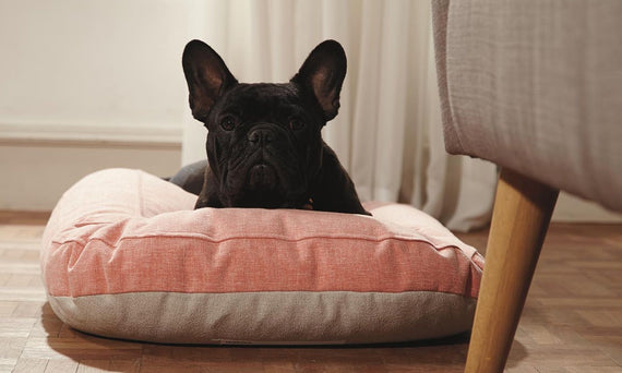 FURST - French Bulldog resting on its high quality peach dog cushion