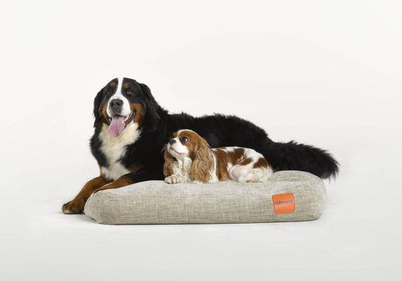 FURST - Adorable dogs on a beige cork cushion