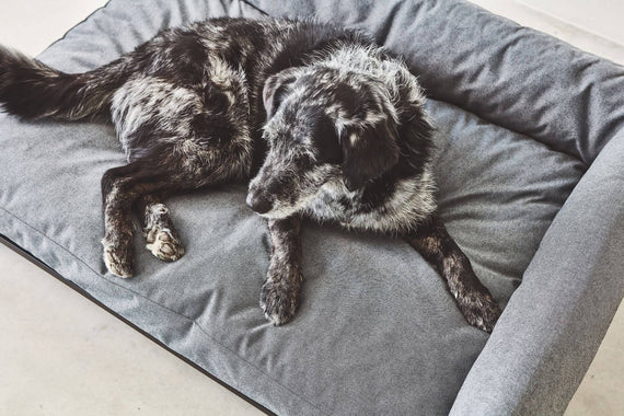 FURST - Dog sofa with right angle black gray color