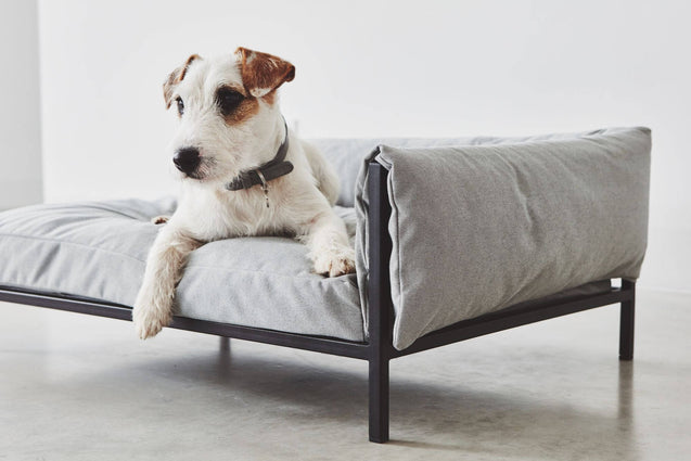 FURST - Jack Russell observing his environment on his sofa, right angle, light gray