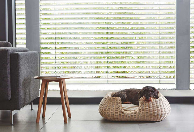 FURST - Adorable dachshund in a basket rattan mio for little dog in a design interior