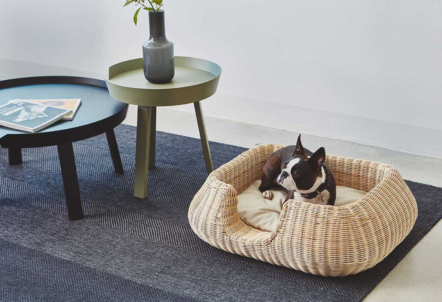 FURST - Adorable Boston terrier in a rattan Basket suitable for the little dog with its cream cushion