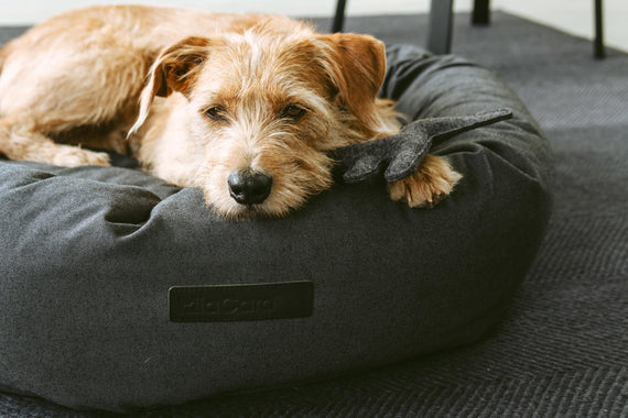 FURST - Comfortable Rondo dog basket in the shape of an anthracite donut