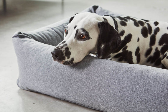 FURST - Adorable Dalmatian installed in his basket MiaCara Stella slate color