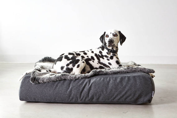 FURST - Adorable Dalmatian on its anthracite lounge cushion Stella