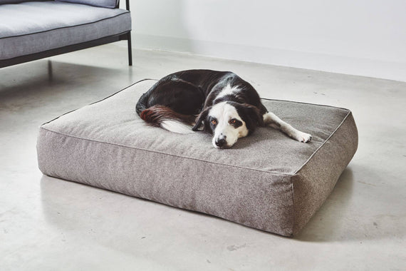 FURST - Beautiful dog on his Stella lounge cushion in mocca color