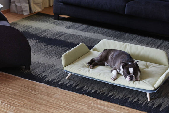 FURST - French Bulldog on his ginger Letto sofa