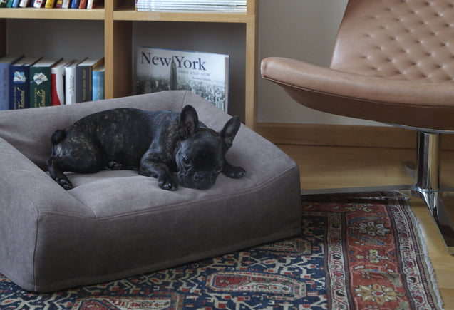 FURST - Adorable French Bulldog lying on her very comfortable Luna sofa for dogs of anthracite color