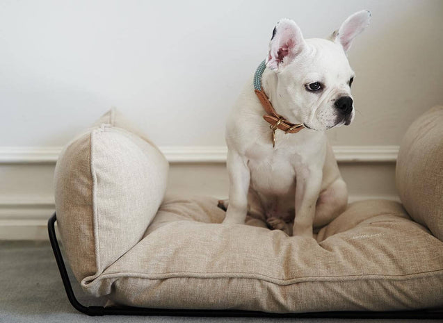 FURST - French bulldog resting in his high quality beige dog sofa