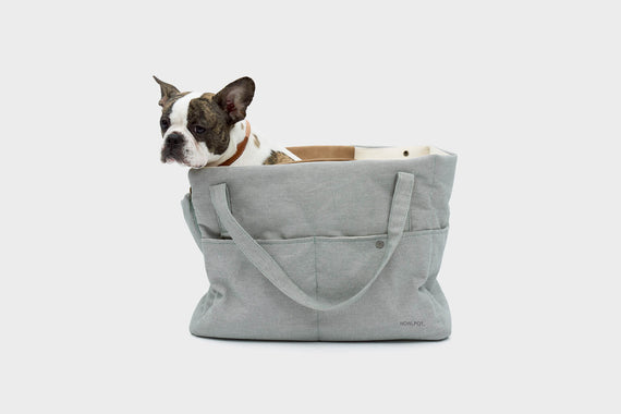 FURST - French Bulldog in his blue spring travel bag