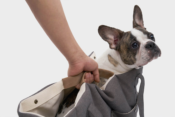 FURST - French Bulldog in his anthracite colored travel bag