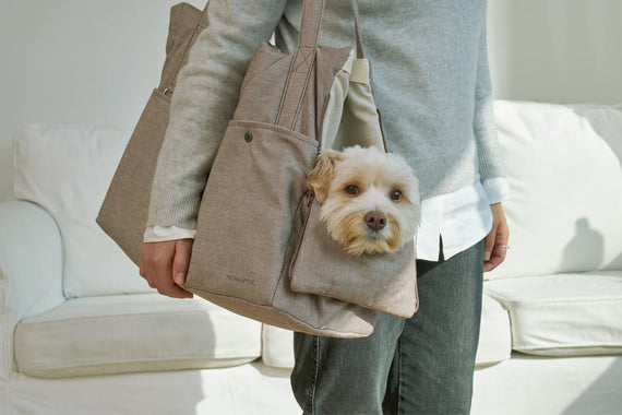FURST - Small dog in his light gray travel bag