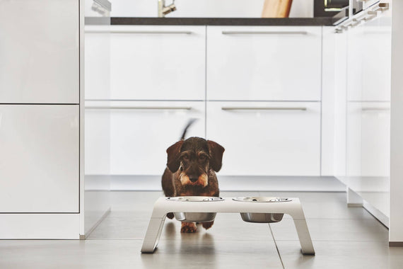 FURST - Dachshund dinner with its raised bowls
