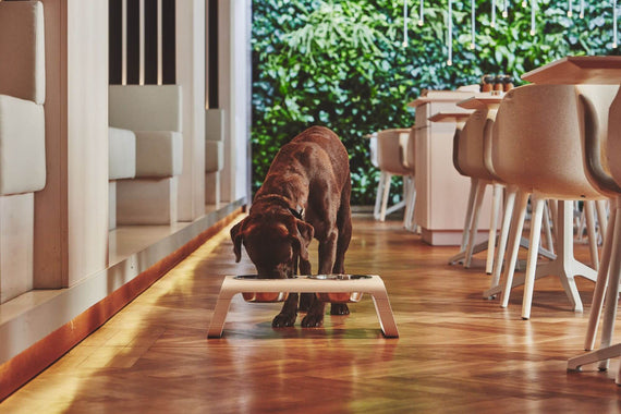 FURST - Dog eating with his raised bowls