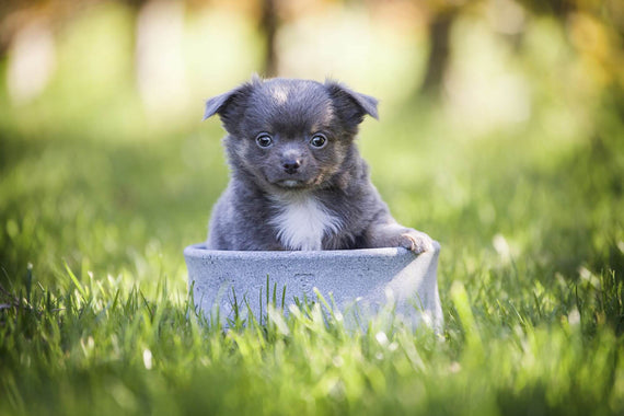 FURST - Adorable puppy posing in a high-end bowl made of gray steatite for dogs