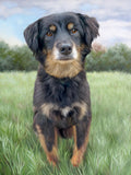 Custom Pet Portrait, Canvas Print, Gallery Wrap, Framed Painting