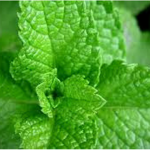 Peppermint    5 ml