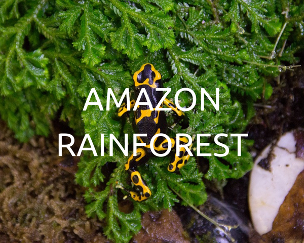 One Tree Planted in Amazon rainforest with every box purchased