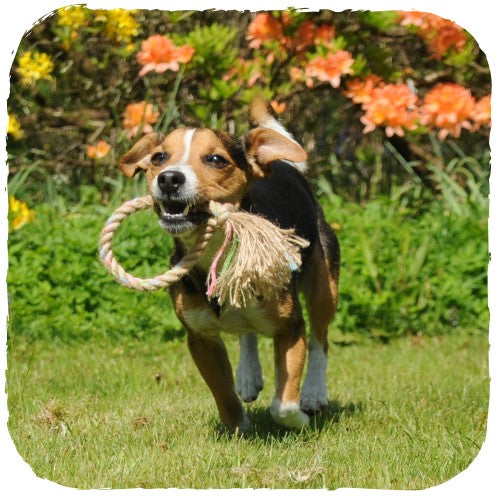 Natural Hemp Rope Toy, Dog Treats, Beco Pets, - The Clean Market