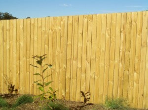 Fence Boards: Treated Pine