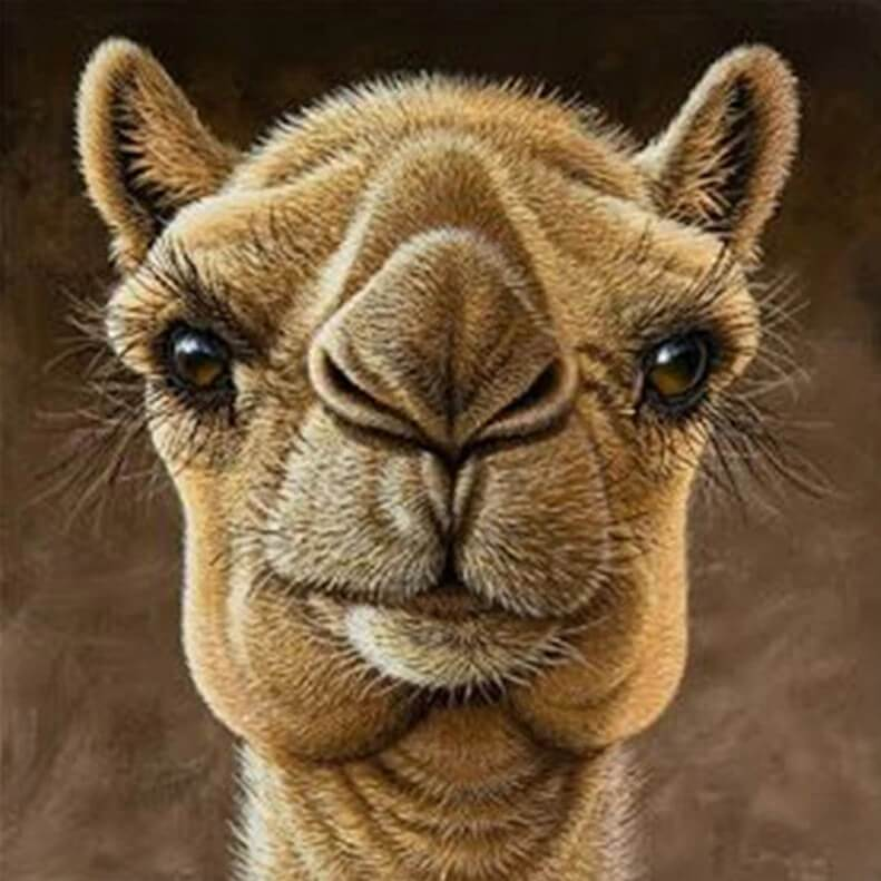 Camel Diamond Painting