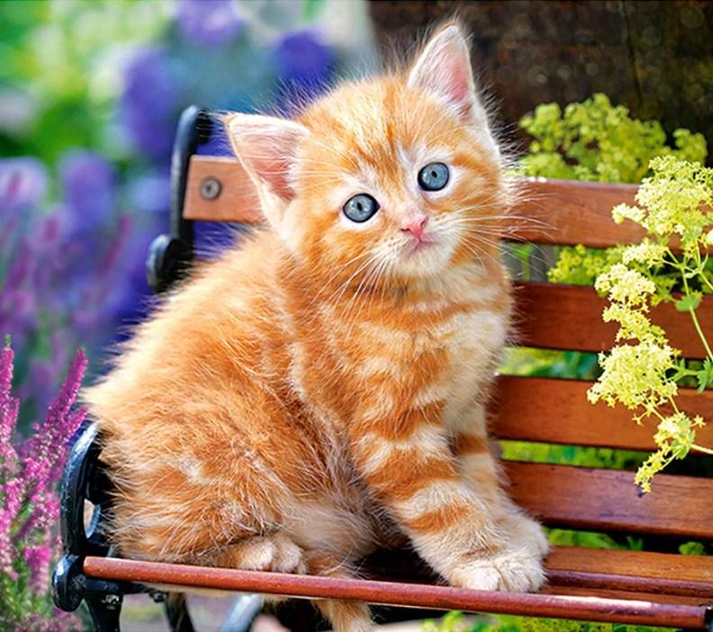 Brown Cat on Bench