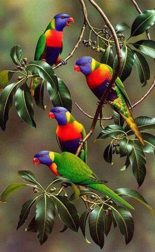 Parrots on Branches of Tree