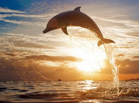 Dolphin Jumping - Animal Diamond Painting