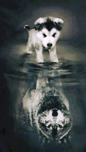 Load image into Gallery viewer, Husky Wolf Reflection Paint with diamonds kit