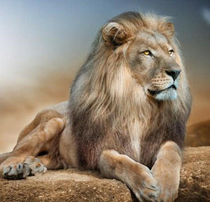 Lion DIY Diamond Painting