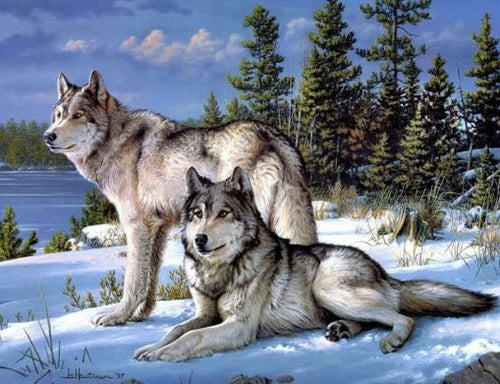 A Pair of White Wolf in Winter Snow Diamond Art Painting kit