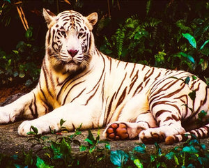 White Tiger DIY Diamond Painting