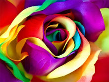Load image into Gallery viewer, Attractive Multi color Roses - Paint with Diamonds