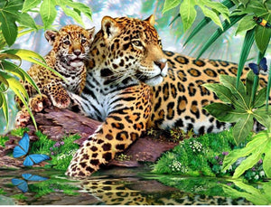 Wonderful Leopard