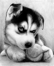 Load image into Gallery viewer, Angry Black & White Puppy Paint by Diamonds