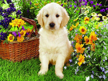 Load image into Gallery viewer, Dog Diamond Painting Kit