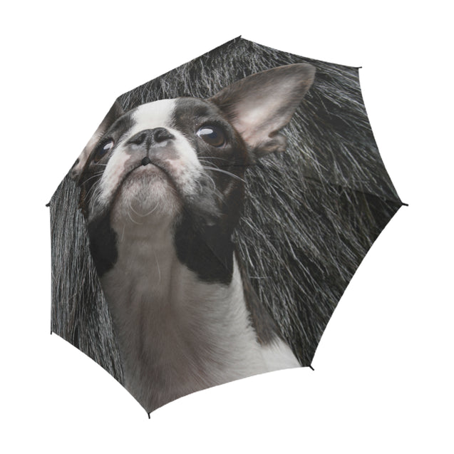 TD 6 Boston Terrier Fur Texture Umbrella