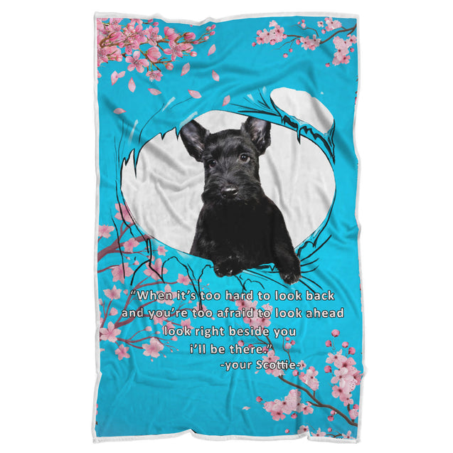 nh 6 scottish terrier beside you blanket