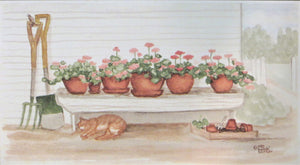Geraniums on the Bench