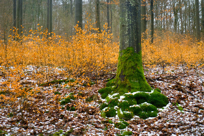Wald-Winter in Nordhessen